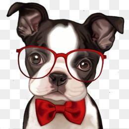 Boston Terrier, French Bulldog, Bulldog, Ear PNG image with transparent background