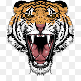 Bengal Tiger, Project Tiger, White Tiger, Snout, Head PNG image with transparent background