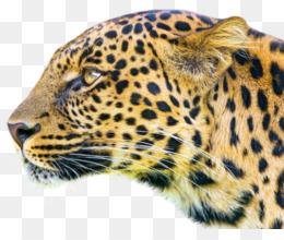 Beatport PNG and Beatport Transparent Clipart Free Download