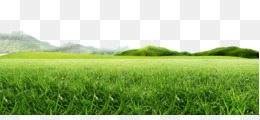 Mountain, Idea, Web Design, Plantation, Lawn PNG image with transparent background