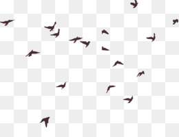 Bird, Silhouette, Pixel, Square, Angle PNG image with transparent background