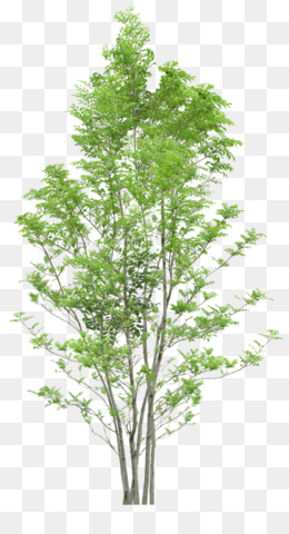 Tree, Diagram, Web Browser, Evergreen, Plant PNG image with transparent background