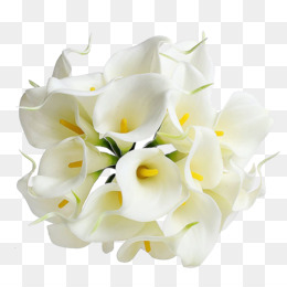 Lily Flower Png Lily Flower White Lily Flower Calla Lily Flower