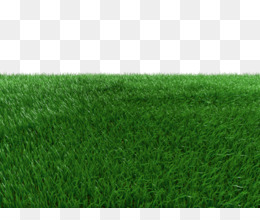 Grass Transparent Background In Grasses Field Transparent Background Thank You For Downloading Free Download Artificial Turf Green Meadow