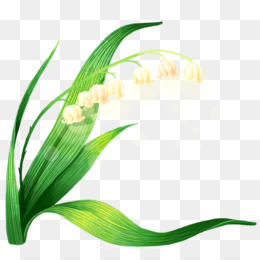 Lily Of The Valley Png Lily Of The Valley Transparent Clipart Free