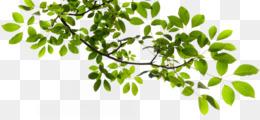 Tree, Branch, Image File Formats, Plant, Leaf PNG image with transparent background