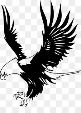 Bald Eagle, Eagle, Just Eagles PNG image with transparent background