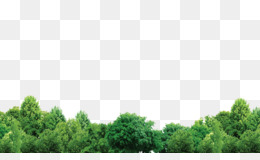 Forest, Tree, Encapsulated Postscript, Sky, Grass PNG image with transparent background