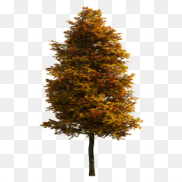 Tree, Encapsulated Postscript, Download, Autumn, Pine Family PNG image with transparent background