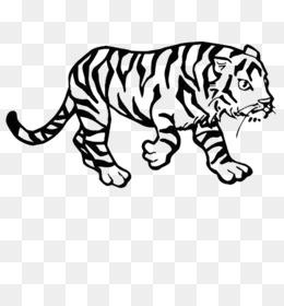Download Gratis Harimau Siberia Bengal Tiger Buku Mewarnai Singa