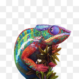 Chameleons, Drawing, Pencil, Scaled Reptile, Reptile PNG image with transparent background