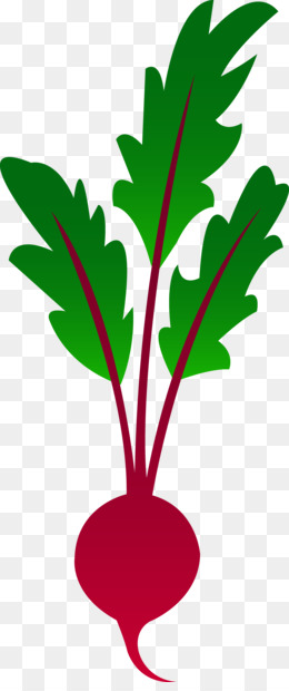 free download beetroot vegetable clip art vegetable garden clipart rh kisspng com