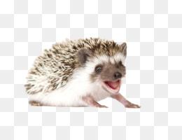 Fourtoed Hedgehog, Pet, Disease, Porcupine, Fur PNG image with transparent background