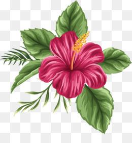 Shoeblackplant Drawing Flower Clip Art Hibiscus Flower Drawings