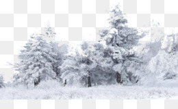 Snow, Tree, Winter, Christmas Ornament, Blizzard PNG image with transparent background