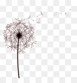 Paper Common Dandelion Drawing Photography