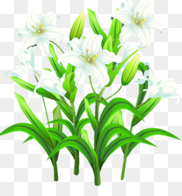 Lilium, Template, Poster, Plant, Flower PNG image with transparent background