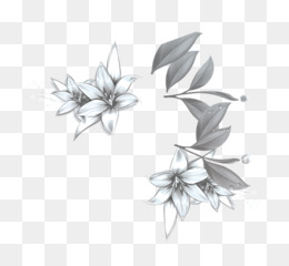 Download, Black And White, Lilium, Flower, Monochrome Photography PNG image with transparent background
