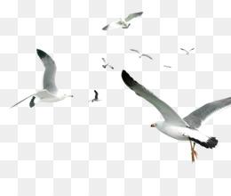Flying Bird PNG - Flying Bird, Flying Bird Silhouette, Flying Birds
