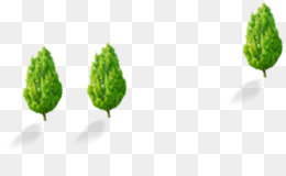 Leaf, Tree, Plant PNG image with transparent background