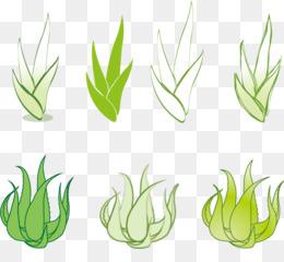 25 Trend Terbaru Sketsa Gambar Tanaman Lidah Buaya Tea And Lead