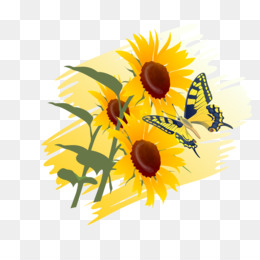 Free download Beautiful flowers sunflower png