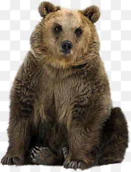 Brown Bear Polar Bear Asian Black Bear Eastern Black Bear