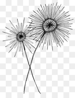 Flower cartoon black and white drawing clip art dandelion png png mightylinksfo