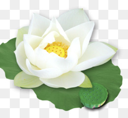 White lotus png white lotus transparent clipart free download png mightylinksfo