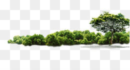 Tree, Jungle, Download, Evergreen, Plant PNG image with transparent background