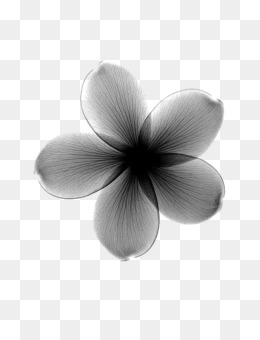 Flower Material Png And Psd Free Download Flower Line Plant