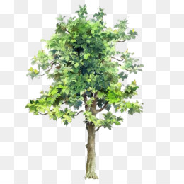 Tree, Drawing, Watercolor Painting, Plant, Leaf PNG image with transparent background