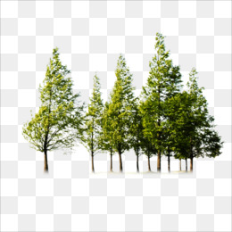 trees png   trees transparent clipart free download tree clipart computer tablet repair sick computer clipart