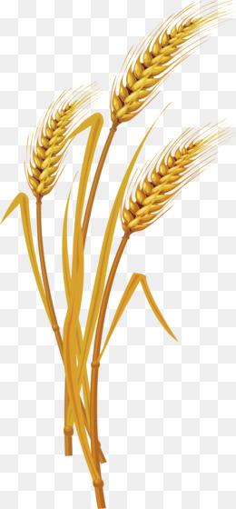 Euclidean vector vecteur vector wheat creative design large euclidean vector vecteur vector wheat creative design large diagram png download 6611423 free transparent grass family png download ccuart Gallery
