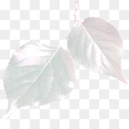 Leaf, Petal PNG image with transparent background