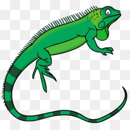 green iguana lizard free content clip art reptile cliparts png rh kisspng com lizard clipart free lizard clip art images