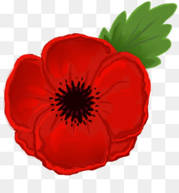 Poppy png poppy transparent clipart free download damask rose png mightylinksfo
