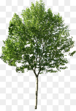 Tree, Computer Icons, Plane Trees, Plant, Shrub PNG image with transparent background