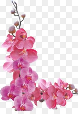 Images Orchid - impremedia.net