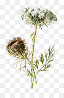 Botanical Name PNG - Learn Botanical Names, Botanical Name Azalea