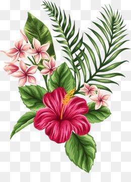 Hibiscus Png Hibiscus Flower Hawaiian Hibiscus Hibiscus Tea