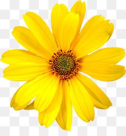 Yellow flowers png yellow flowers transparent clipart free yellow flowers png yellow flowers transparent clipart free download flower yellow computer file yellow flowers mightylinksfo