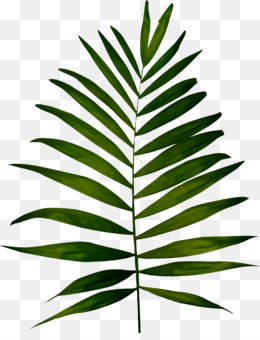 fern png amp fern transparent clipart free download