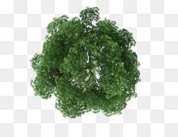 Tree, Rendering, Architecture, Plant, Leaf PNG image with transparent background