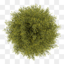 Tree, Stock Photography, Photography, Evergreen, Plant PNG image with transparent background
