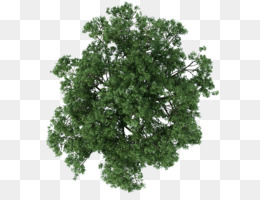 Tree, Architecture, Texture Mapping, Plant, Leaf PNG image with transparent background