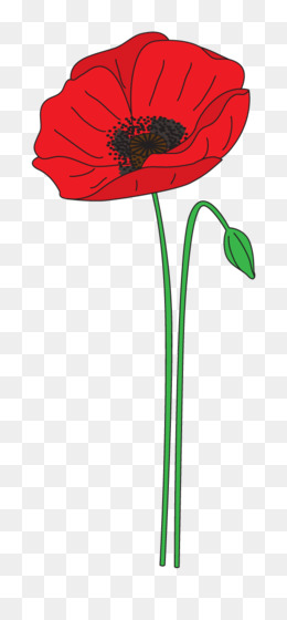 Remembrance poppy anzac day flower clip art poppy png download remembrance poppy anzac day flower clip art poppy png download 5391123 free transparent plant png download mightylinksfo