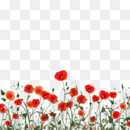 Poppy png poppy transparent clipart free download clip art poppy poppy png images mightylinksfo