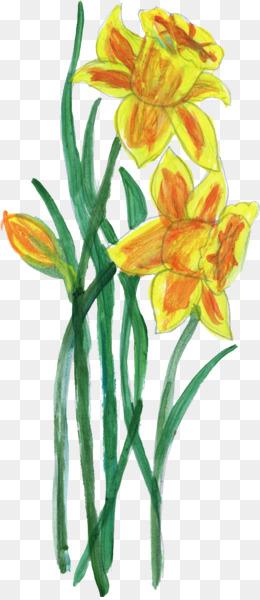 Flower, Plant Stem, Lilium, Plant, Flora PNG image with transparent background