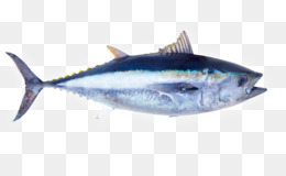 4 Pics 1 Word, 4 Letters, Letter, Milkfish, Marine Biology PNG image with transparent background